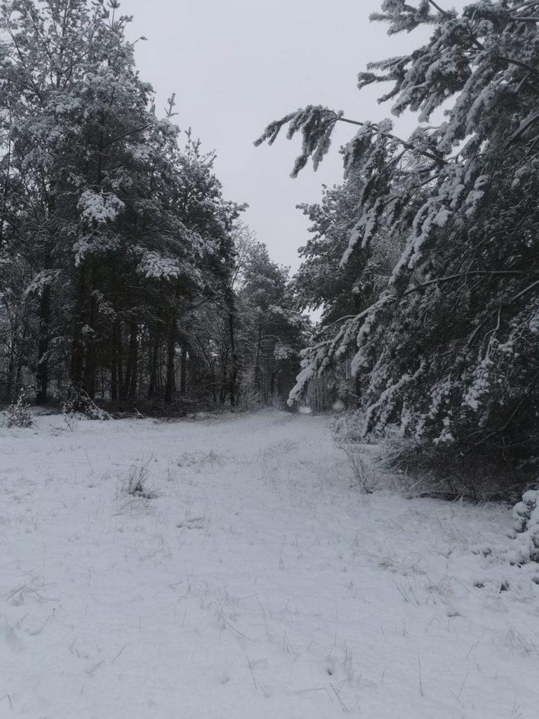Winterwald Bei Sausedlitz